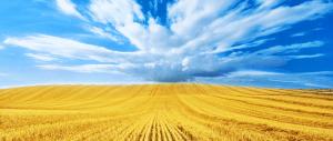 Alimentation - Agriculture